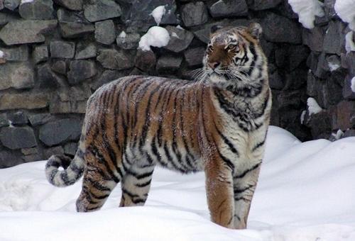 Фотокаталог История создания в Новосибирске зоопарка